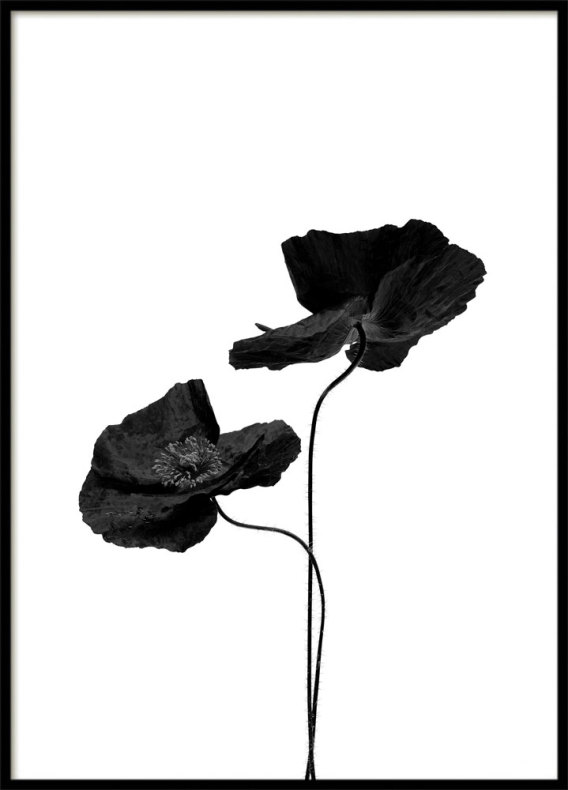 POSTER, TWO BLACK FLOWERS