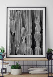 Cactus Poster bw