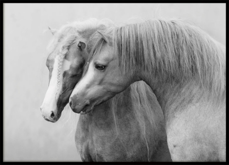 Two Horses, Poster