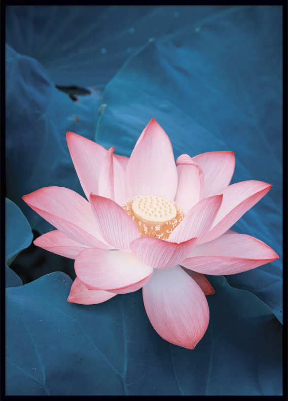 Lotus flower poster posters prints online archiveseven lotus flower poster mightylinksfo