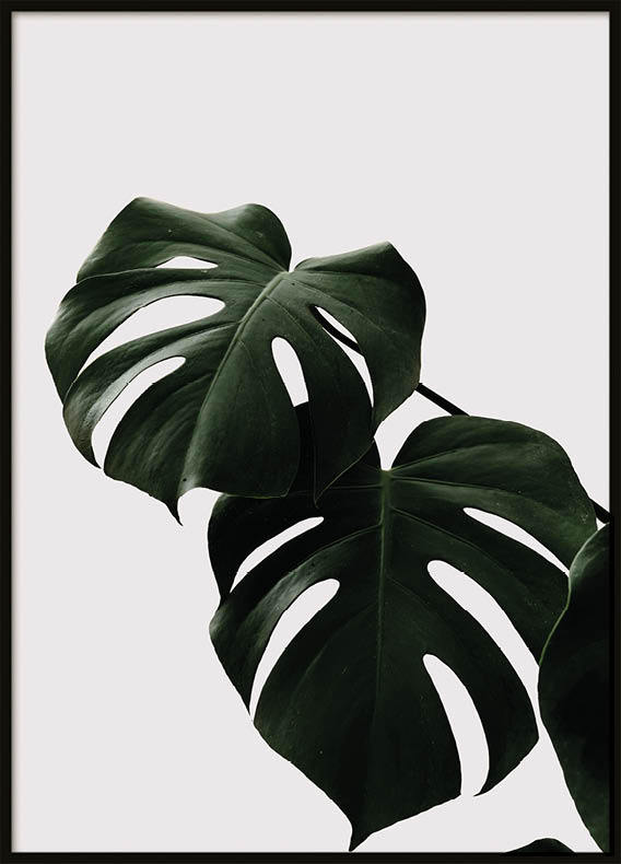 Poster, Two green leafs