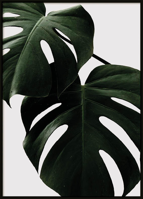 Poster, Two green leafs 2