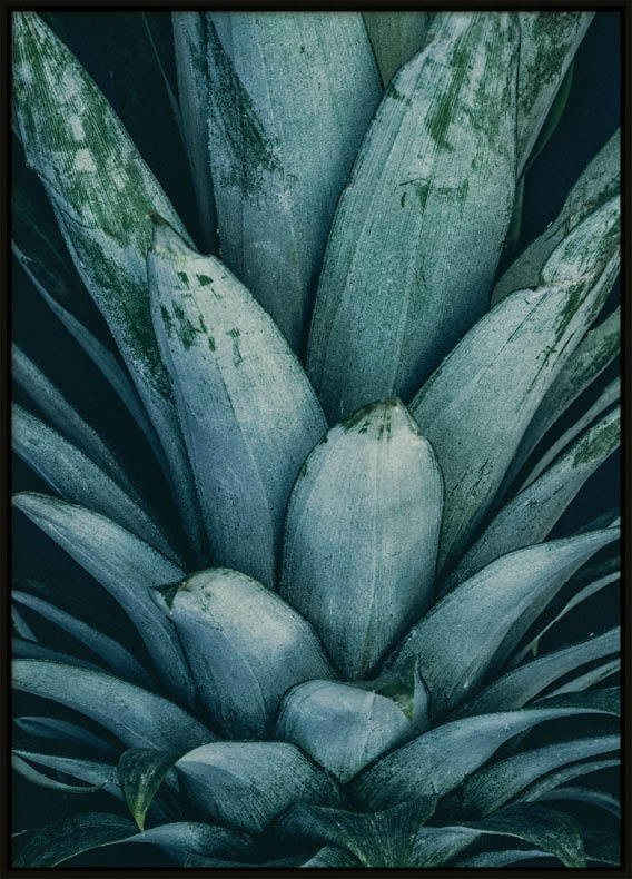 Poster, Pineapple Leafs