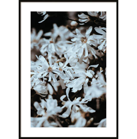Poster, Yellow White Flower