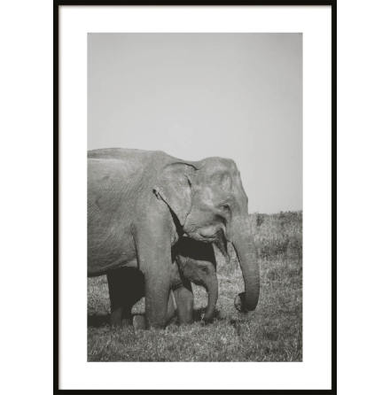 Poster, Two Elephants