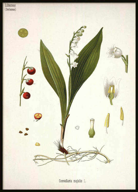 Vintage Lily of the valley, Poster