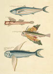 Vintage Fishes 1, Poster