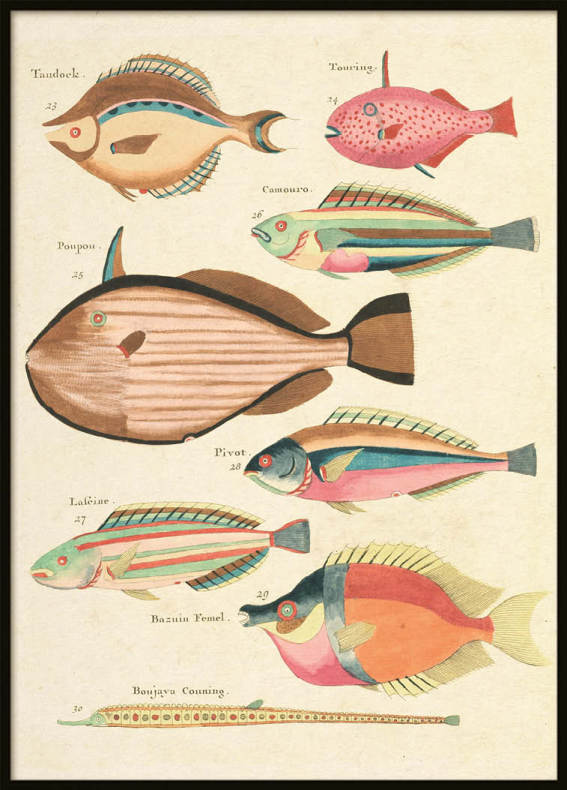 Vintage Fishes 2, Poster