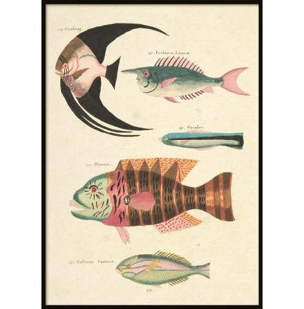 Vintage Fishes 4, Poster