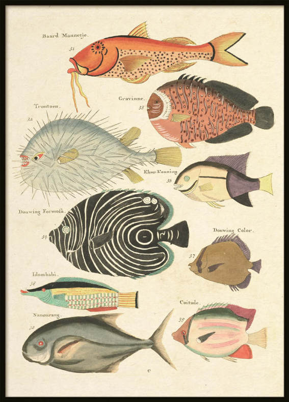 Vintage Fishes 5, Poster