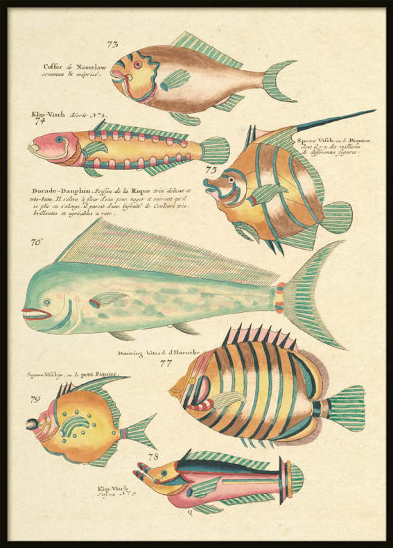 Vintage Fishes 6, Poster