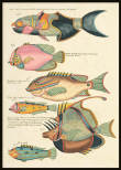 Vintage Fishes 7, Poster
