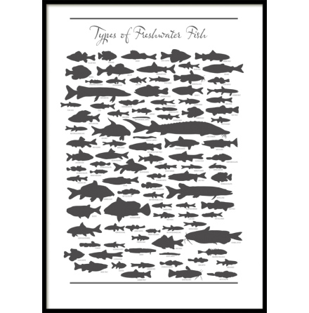 Freshwater Fish, Poster