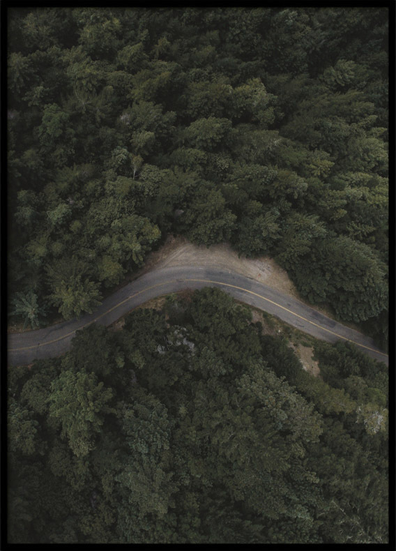 Poster, Forest Road III