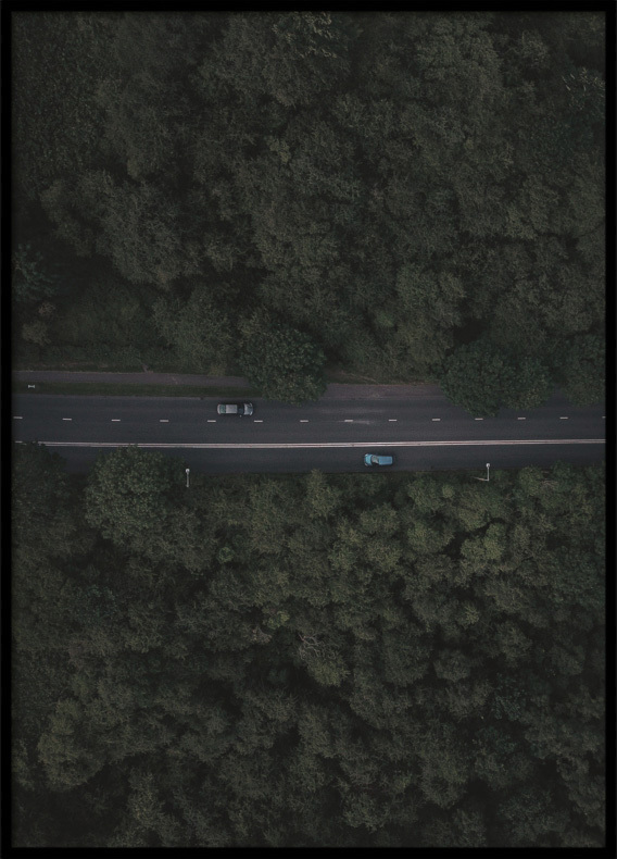 Poster, Cars in the Forest