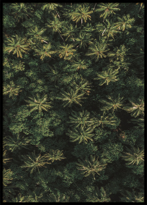 Poster, Palm Trees