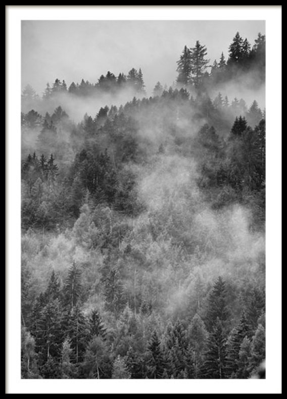 FOREST, POSTER