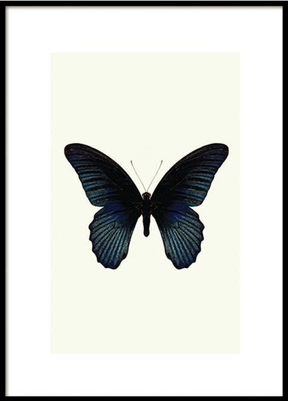 BUTTERFLY BLUE, POSTER