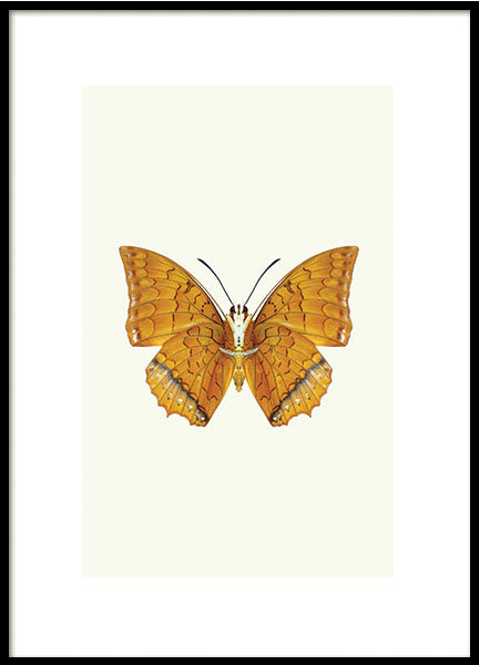 POSTER, BUTTERFLY ORANGE