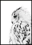 POSTER OWL