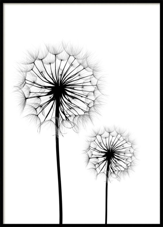 Posters with dandelion print prints online